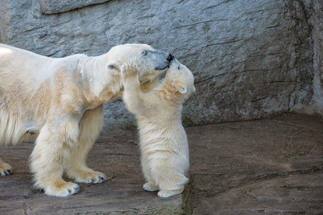 get a kiss