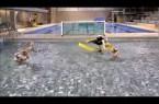 Harlem Shake Echirolles Water-Polo