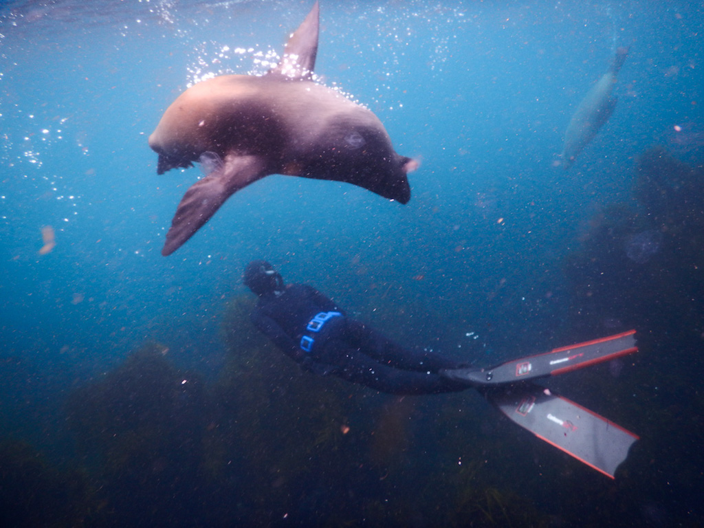 Freediving boat excursions, training, tours and courses in Melbourne