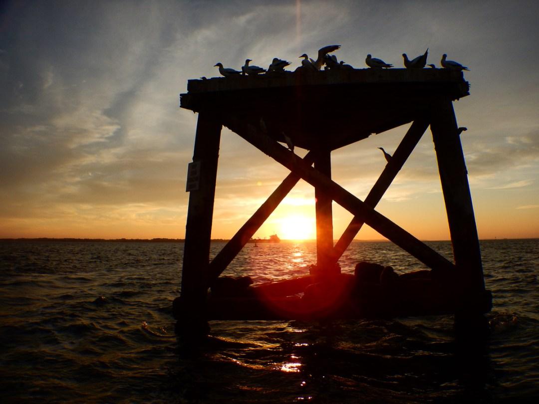 Scenic Wildlife Eco Boat tour in Port Phillip Bay from the Mornington Peninsula