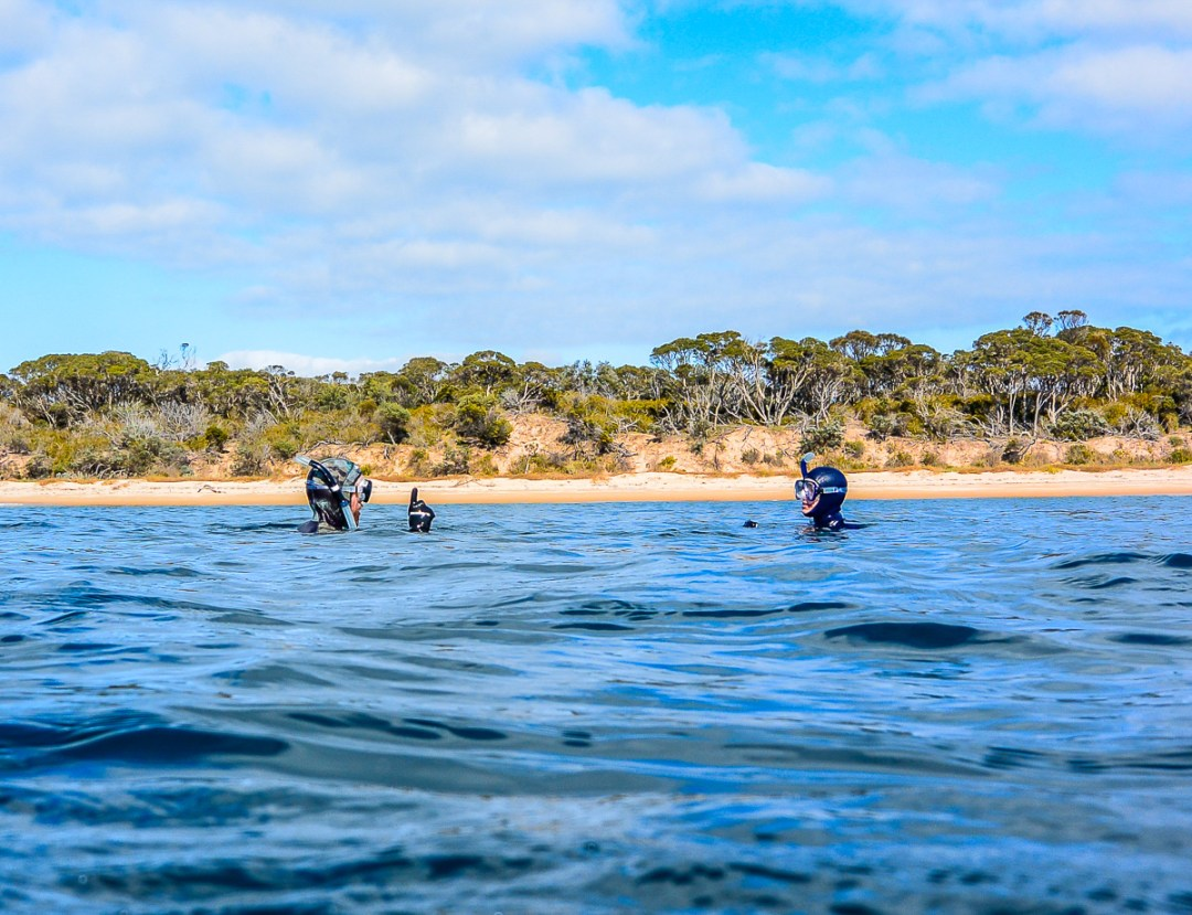 Learn to freedive, freediving beginner courses in Melbourne, Victoria