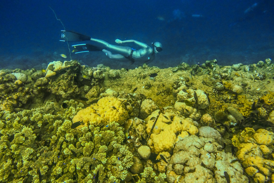 Freediving tours and holidays in the Solomon Islands with WaterMaarq