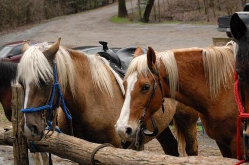 Horses tied to a post at the Smoky Mountain Horseback Riding adventure in Pigeon Forge