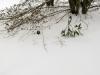 snow-wendell-7595