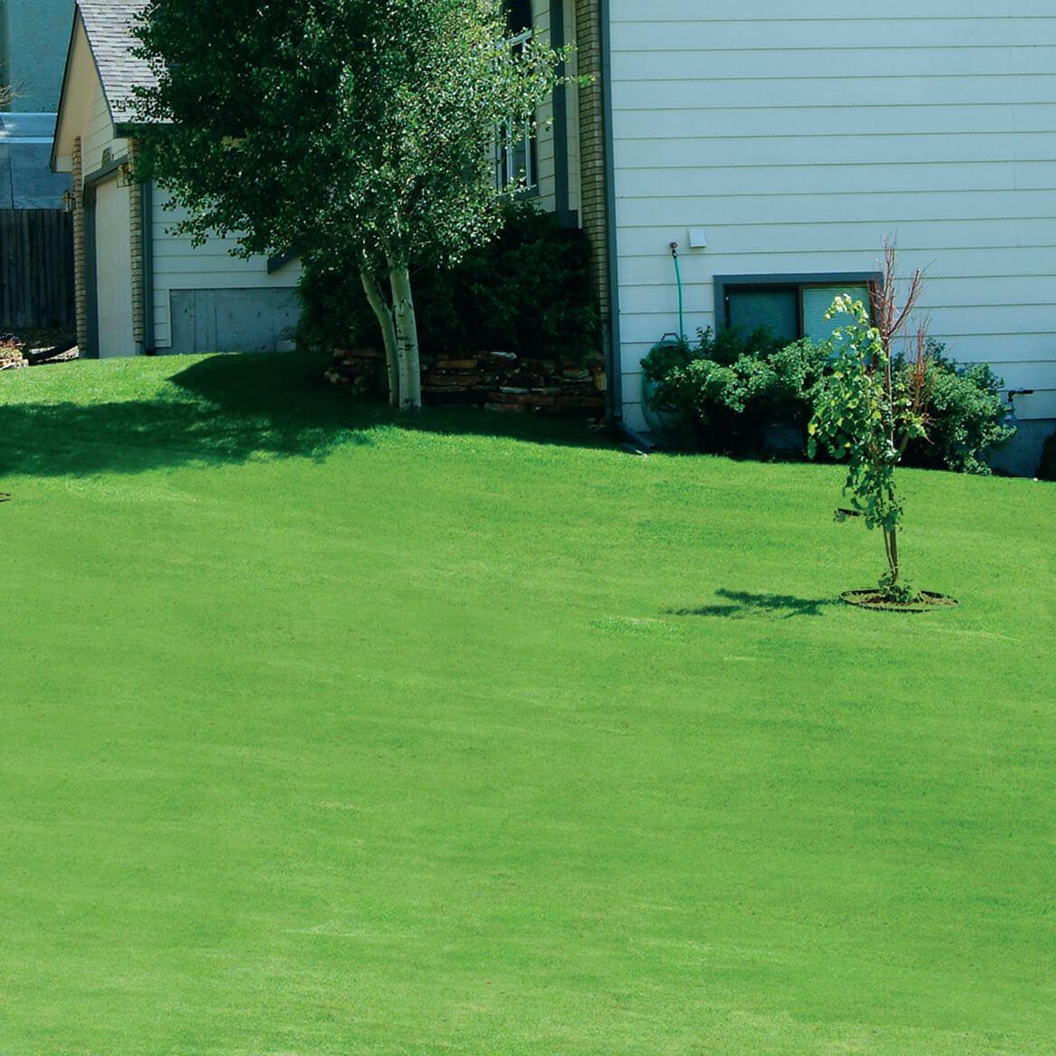 Fullsize Of Canada Green Grass