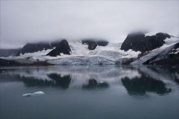 Arctic_whites