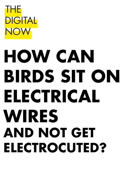 0howcanbirds.jpg