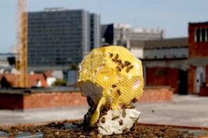 Urban bee activism