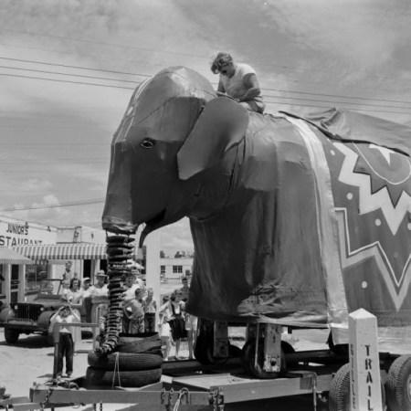 0-elephant-fayetteville-1953-life-p7