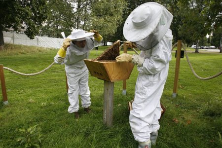 2beekeepers78b9f3aede_b