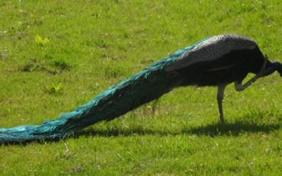 Animals of Weardale