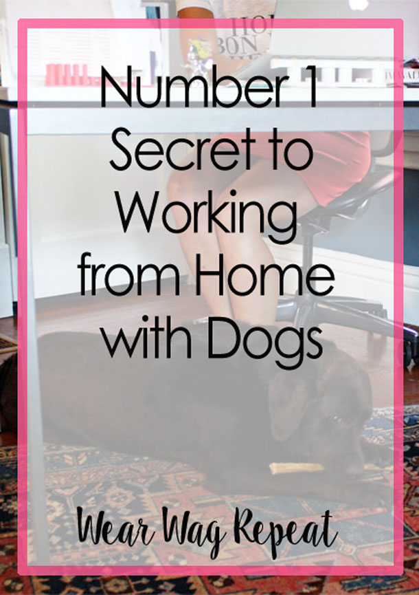 Number One Secret to Working from Home with Dogs