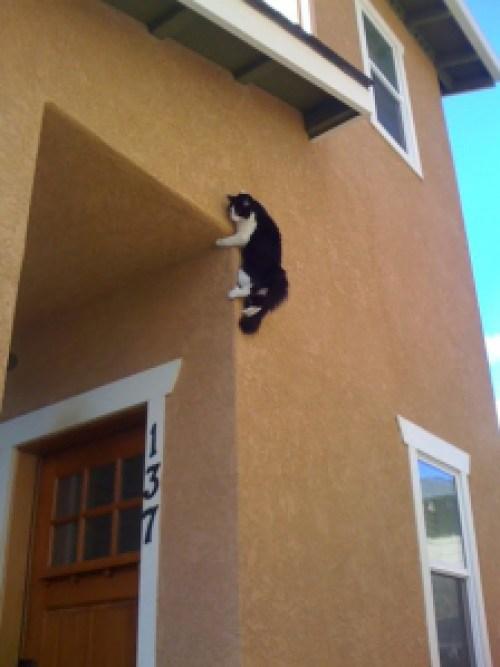 ninja-cat-hiding-funny-44__605