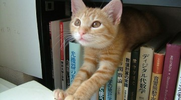 12 Cats that are Awesome Librarians
