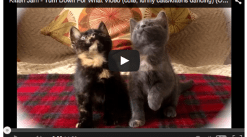 Our Favorite Dancing Cat Video of 2014