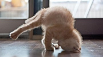12 Cats Doing the Cutest Yoga