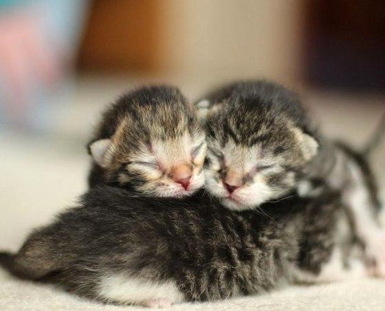 9 Smitten Kittens To Make Your Valentine S Day