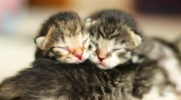 9 Smitten Kittens to Make Your Valentine's Day!