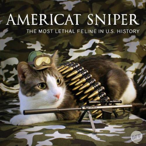 american sniper cat