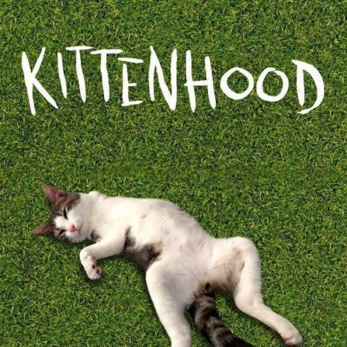 kittenhood cat