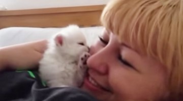 This tiny kitten gave its human so many tiny kisses. Watching it will melt your heart!