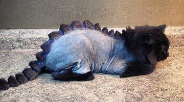 VIRAL: The Dragon Cut – Cute or Cruel?