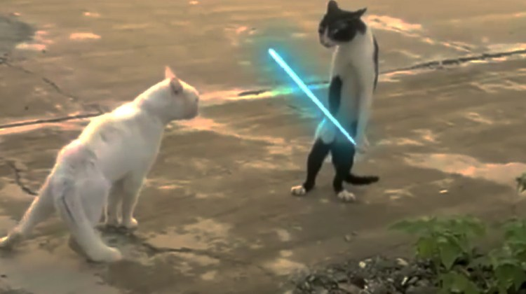 We've Always Suspected That Cats Are Jedi – Finally We Have Video Proof!