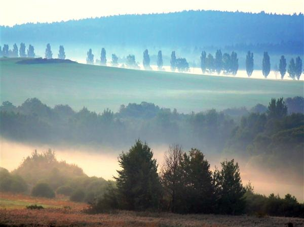Morning Mist - Bohemian Forest