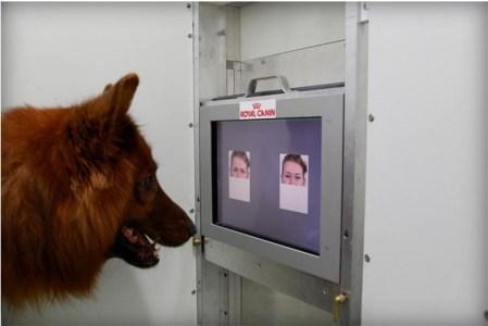 Logran que perros distingan expresiones de rostros humanos
