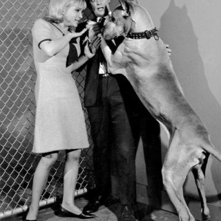 David McCallum looking terrified of a huge dog
