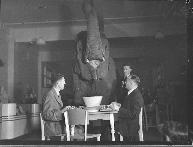 Elephants Tea Party