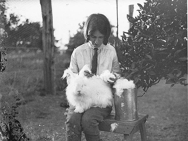 1930s rabbit