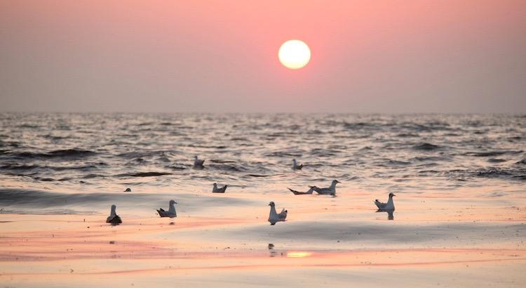 Wir glauben alles Leid währe ewig, dabei erleben wir täglich, dass der Dunkelheit der Sonnenaufgang folgt. - Esragül Schönast