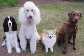 Lee's Competion class. From left to right: Oreo, Bailey, Morgen and Mandy.