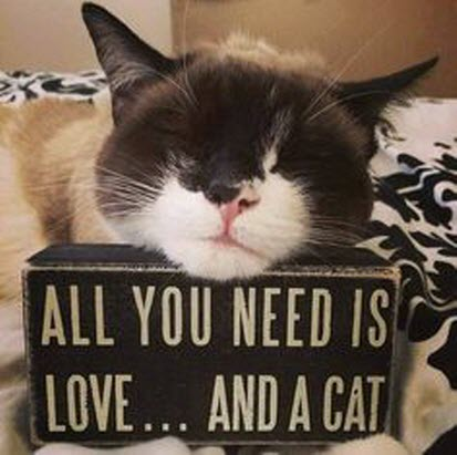 Download Love This Kitty! - 14th November 2014