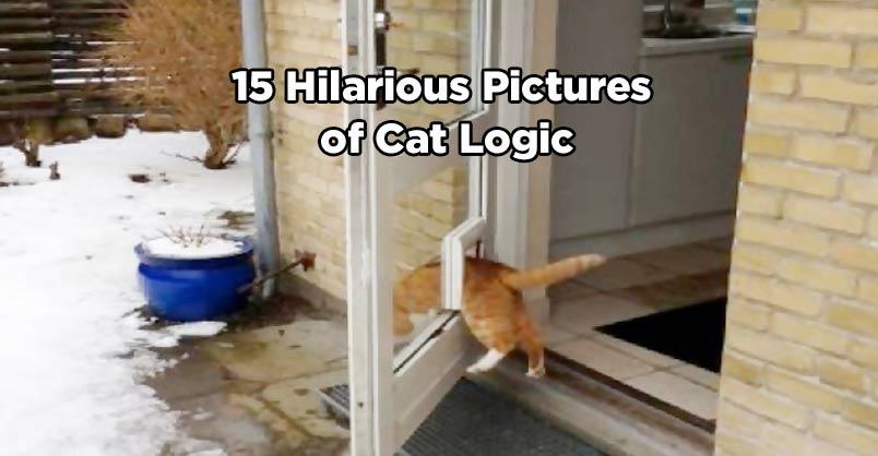 15 Hilarious Pictures of Cat Logic