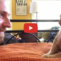 Man Gets Revenge On Cat Who Woke Him Up At 4am Every Morning