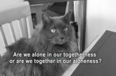 Meow – Cat Forgein Film (Video)