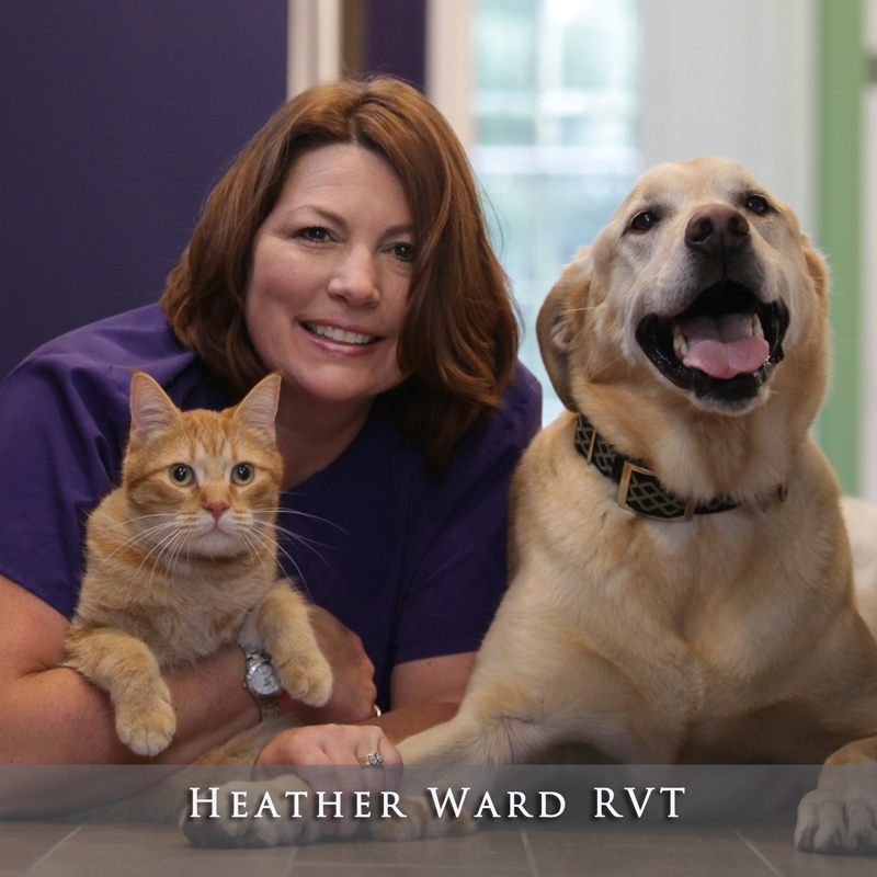 Heather Ward RVT
