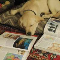 Raise A Puppy Change a Life : Our Homeschool Puppy Project
