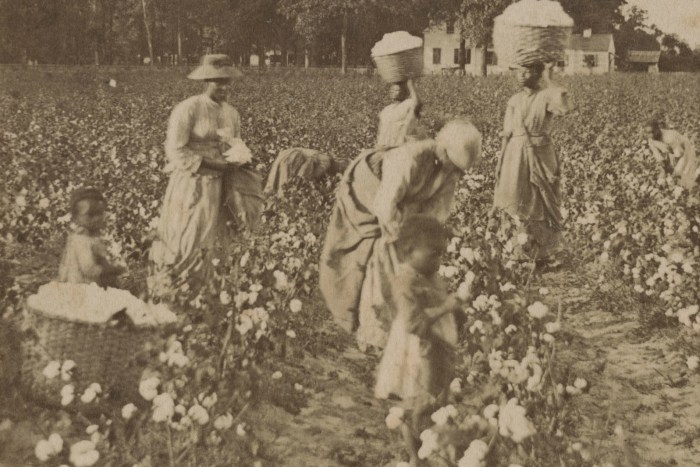 Women and Children Picking Cotton