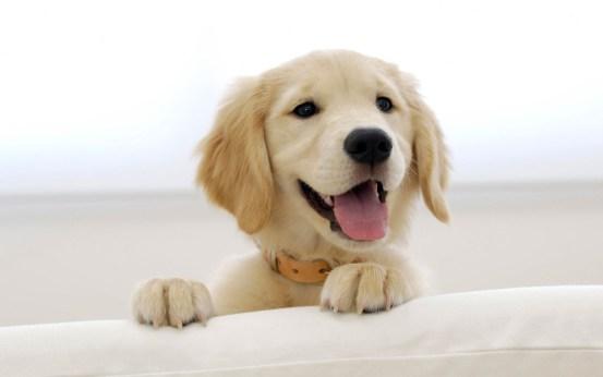 cute-dogs-01