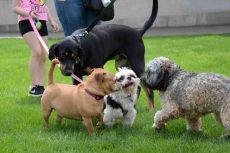 PHOTOS: Doggo Meet and Greet!