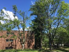 Wesleyan's Tree Removal Blog: A Place of Remembrance