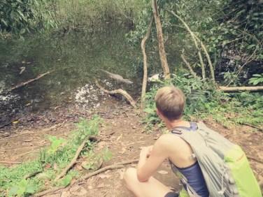 Die Kaimane schwimmen hier rum wie die Enten im Teich in Wiesbaden