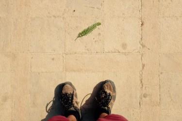 Blatt auf römischem Boden, Gerasa, Jordanien