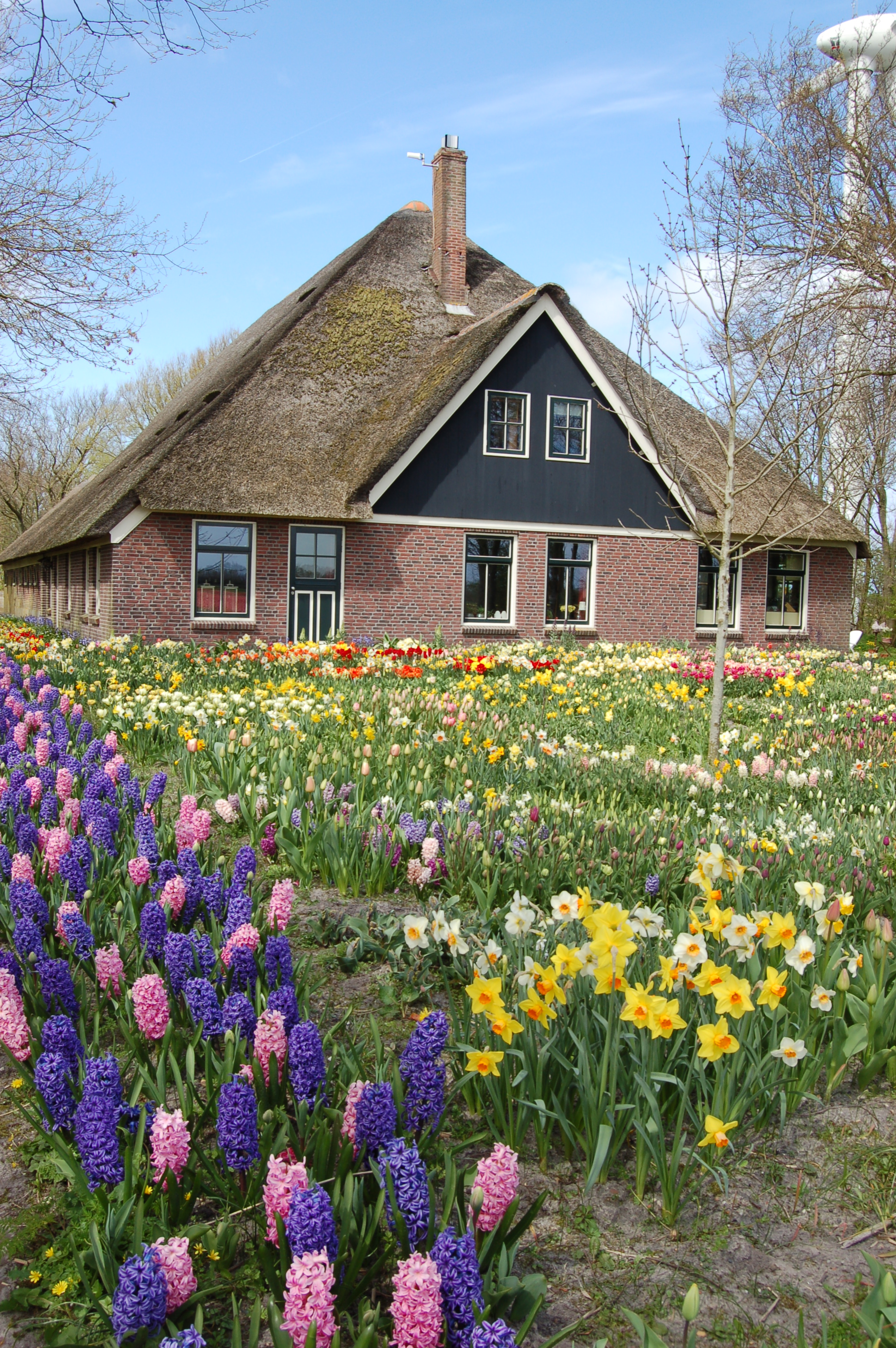 Staggering Our Dutch Carlos Van Der Surrounded His Home Show What Flowerslook Like Our Springtime Visit To Holland Flower Blog Idea Is To Inspire Visitors And houzz-03 Holland Bulb Farms