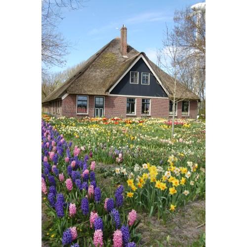 Medium Crop Of Holland Bulb Farms