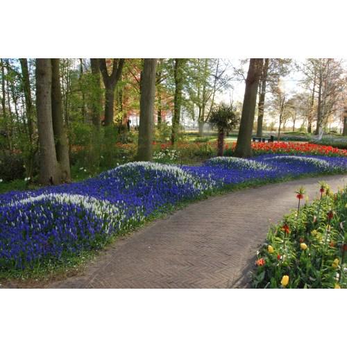 Medium Crop Of Royal Dutch Gardens
