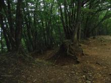 われらがWFR ★ 早稲田大学山岳サイクリング部動画日記-分岐